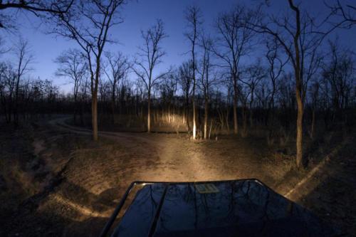 Night Safari MMD4040-1