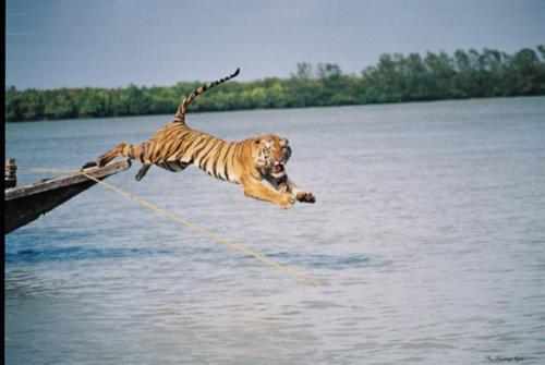 tiger Flight